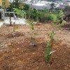 🍀植樹作業中🌴
