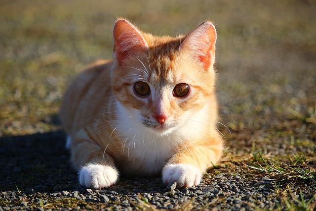 💮猫の日でした🐹�