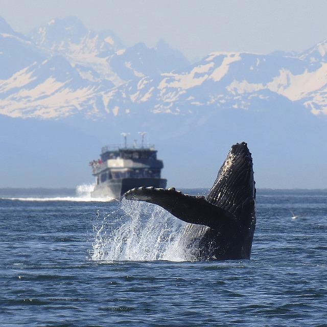 ビハインド・ザ・コーバ捕鯨問題の謎に