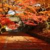 京都の紅葉風景