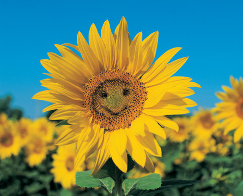 Smiling yellow flower