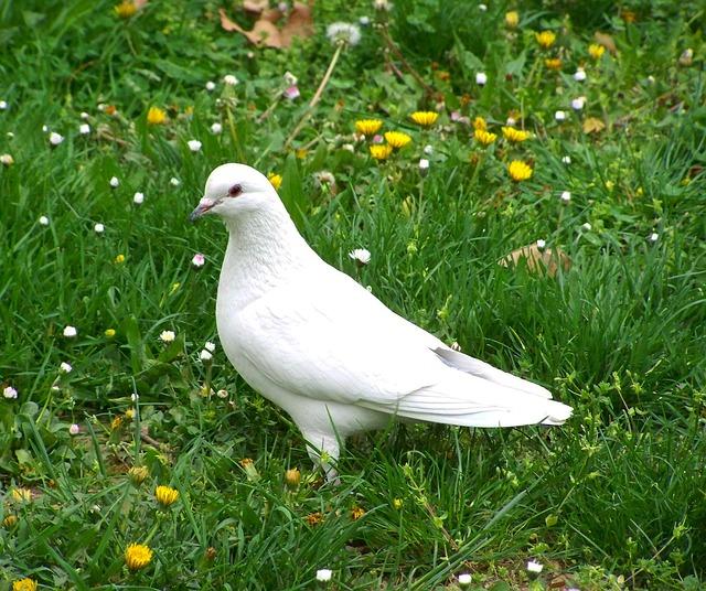 平和のシンボル・鳩さんの生態に想う?