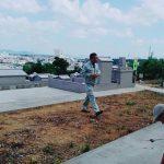 うるま市田場の園・分筆の為の測量風景