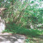 河川工事に伴うお墓の移動調査のひとコマ