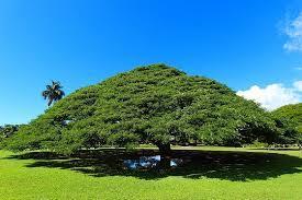 このき何の樹1