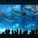 沖縄ちゅら海水族館に行ってきました。
