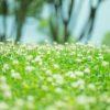 沖縄風習シリーズ・お通夜前に行う『ヌジファ』の儀式。具体的な流れや方法等